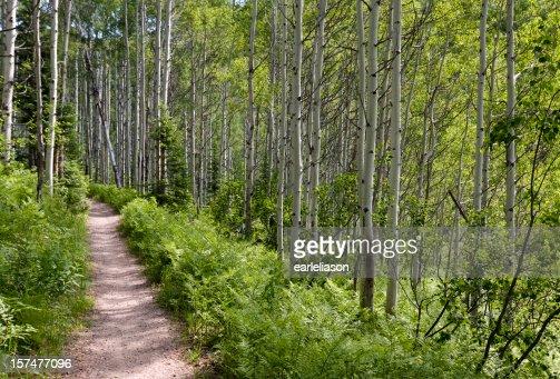 トレイルアスペンの森