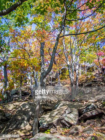 Trail in the autumn forest : Stock Photo