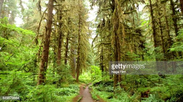 Trail in the Hoh Rainforest