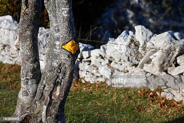 Trail marker on a tree next to a drywall, Creux du Van, Boudry, Canton Neuchâtel, Switzerland, Europe