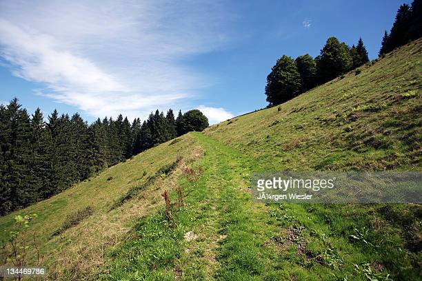 Trail on a steep slope at Rottecksattel in the Black Forest, Baden-Wuerttemberg, Germany, Europe