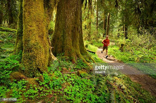 A trail runner running through a forest