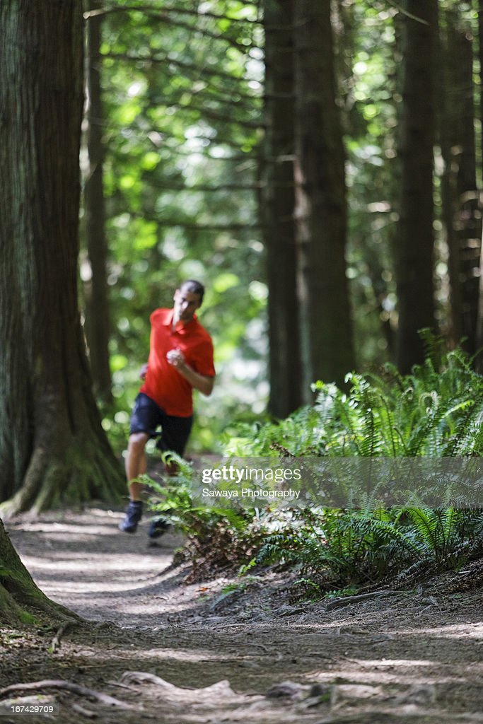 Trail running in evergreen forest : Foto de stock