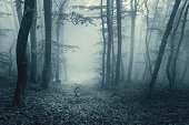 Trail through a magic dark forest in fog with vintage toning. Spring morning in Crimea. Magical atmosphere. Fairytale