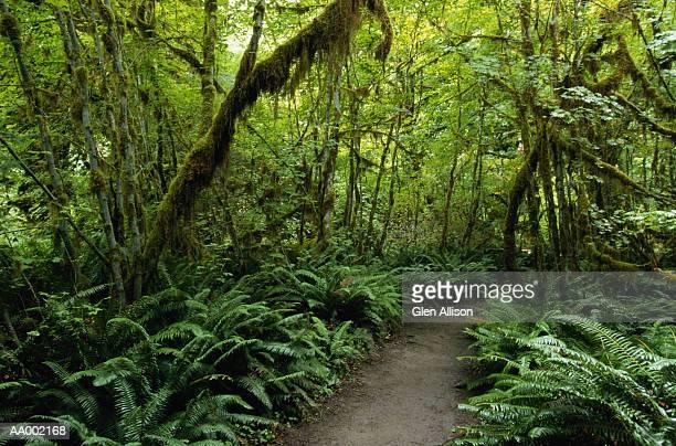 Trail Through the Hoh Rainforest