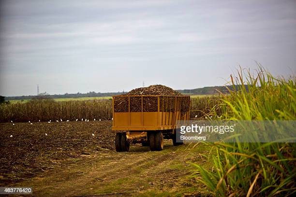 A trailer is loaded with sugarcane stalks during a harvest outside Trinidad Cuba on Saturday Jan 24 2015 A new agribusiness group the US Agriculture...