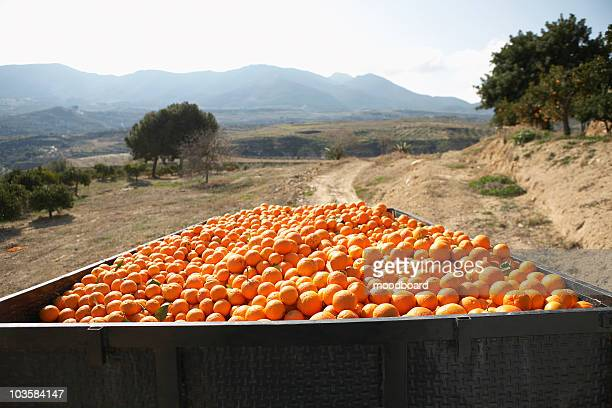 Trailer with oranges