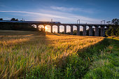 A golden crop of barley below the railway viaduct with motion blurred train at Lesbury, as the River Aln approaches the North Sea at Alnmouth