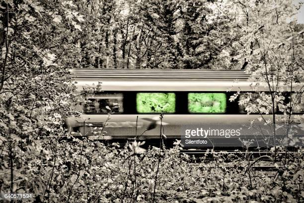 Train Passing in the Woods