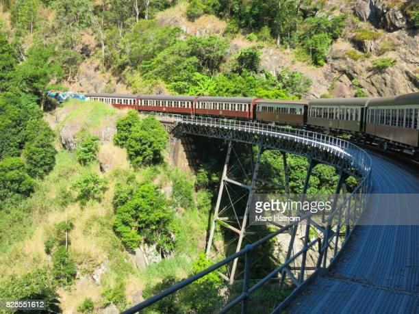 Train passing over a bridge in the forest