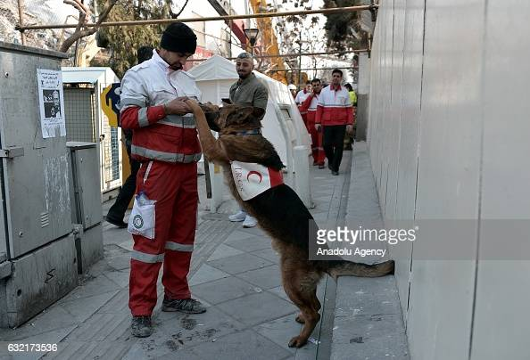 A trained search and rescue dog is seen after the 15floor Plasco Tower one of central Tehrans bestknown commercial buildings collapsed after being...