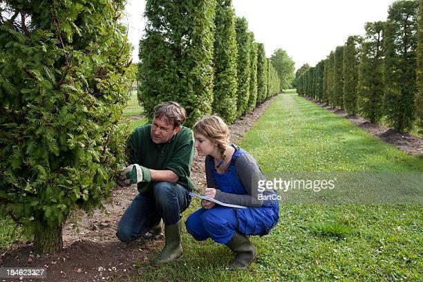Trainee at formal garden