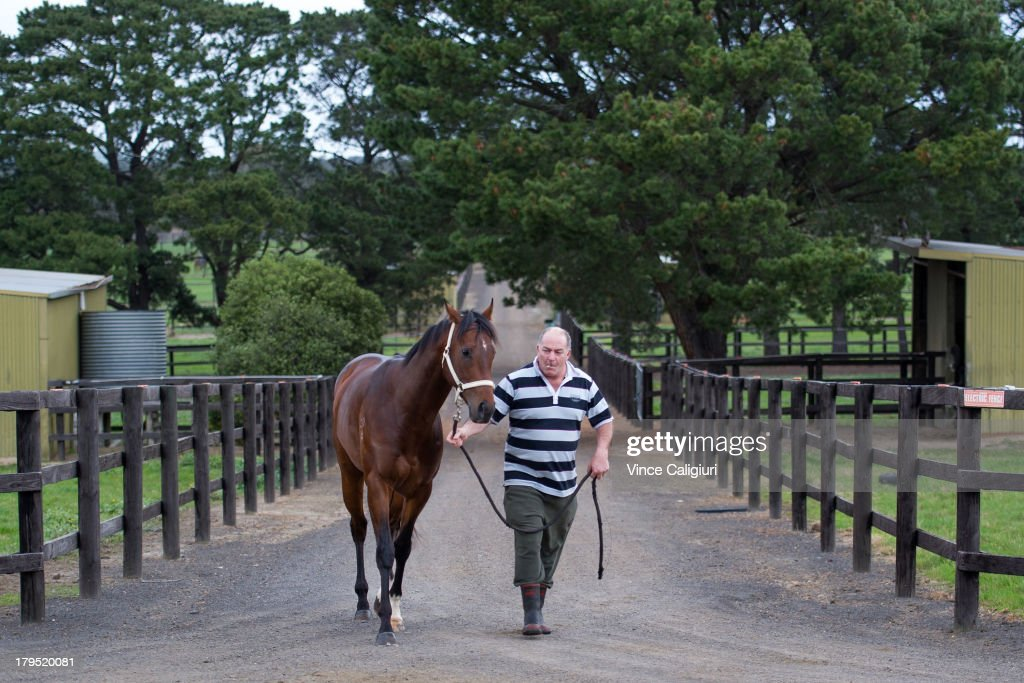 Trainer <a gi-track='captionPersonalityLinkClicked' href=/galleries/search?phrase=Andrew+Campbell&family=editorial&specificpeople=1689074 ng-click='$event.stopPropagation()'>Andrew Campbell</a> walks Cauthen back to stables after trackwork at Talwood Park on September 5, 2013 in Melbourne, Australia.