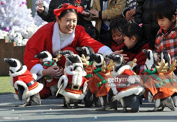 A trainer controls penguins dressed in Santa Claus costumes as they parade for children during a promotional event at the Everland amusement park in...