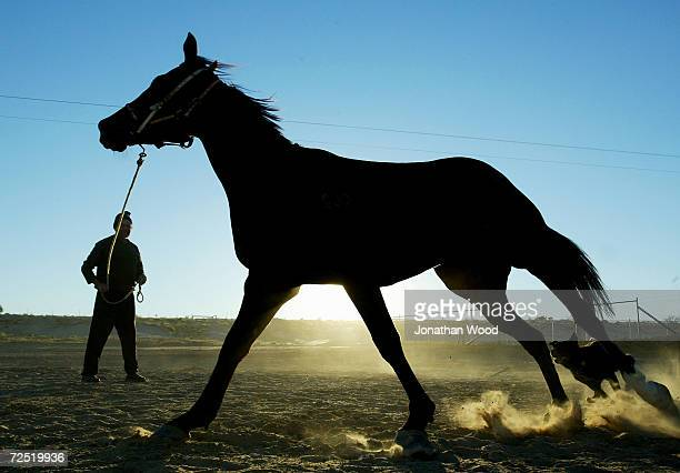 Trainer Don Hateley puts his horse On My Oath through early morning trackwork at the Birdsville Races September 4 2003 in Birdsville Australia...