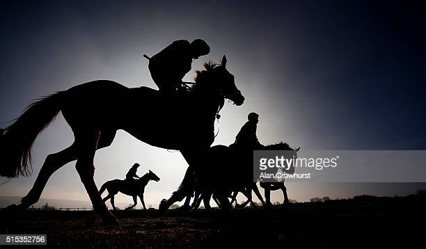 Trainer Gordon Elliott's string on the gallops at Cheltenham racecourse on March 13 2016 in Cheltenham England