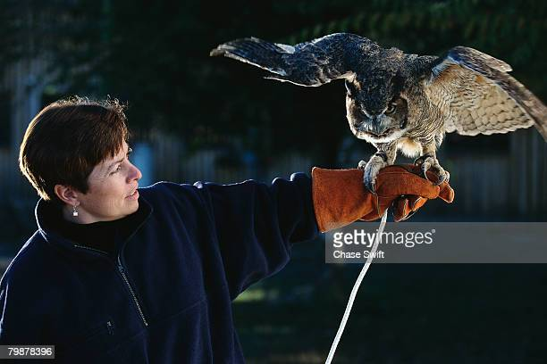 Trainer Holding up Great Horned Owl