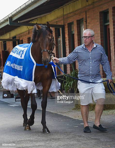 Trainer Mick Price parading Blue Diamond chance Flying Artie during the launch of 'Relaxed Racing' carnival at Caulfield Racecourse on February 11...