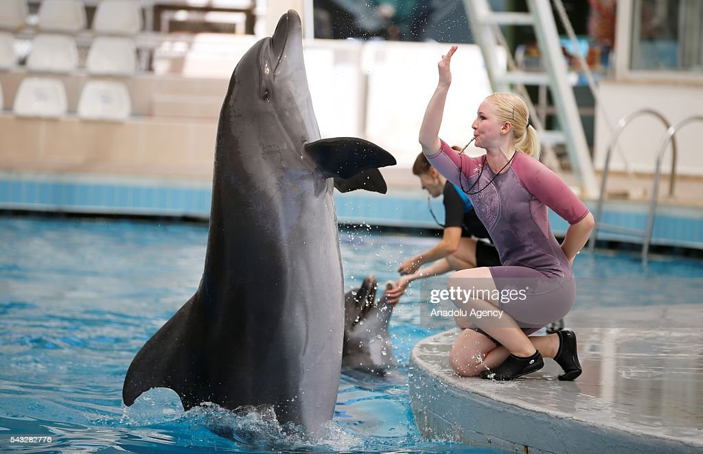 A trainer performs a show with a Dolphin as mostly Ukrainian, Serbian and German tourists watch it in Antalya, Turkey on June 27, 2016.