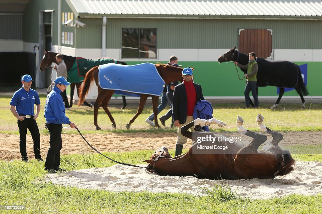 Trainer Saaed bin Suroor watches Royal empire roll in the sand during trackwork ahead of the Melbourne Cup at Werribee Racecourse on November 4, 201 in Melbourne, Australia.