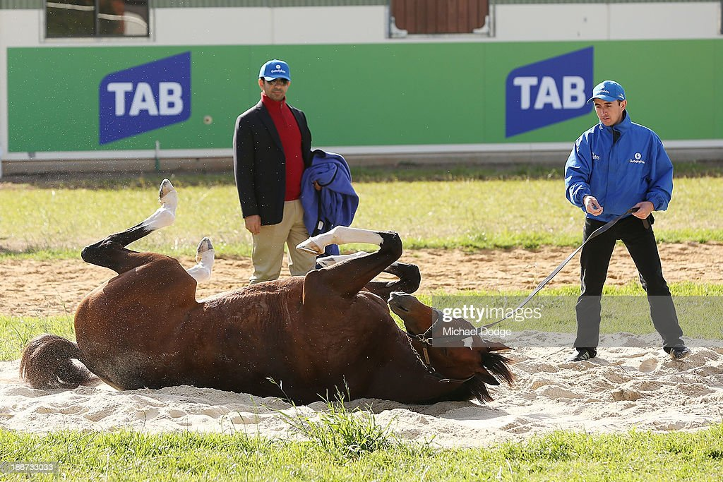 Trainer Saaed bin Suroor (L) watches Royal empire roll in the sand during trackwork ahead of the Melbourne Cup at Werribee Racecourse on November 4, 201 in Melbourne, Australia.