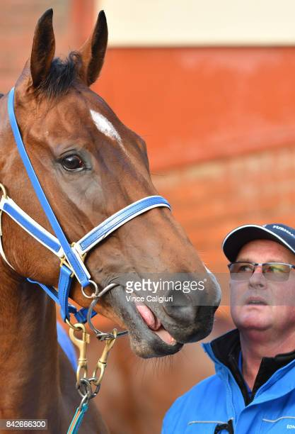 Trainer Toby Edmonds is seen with Houtzen after track gallops at Moonee Valley Racecourse on September 5 2017 in Melbourne Australia
