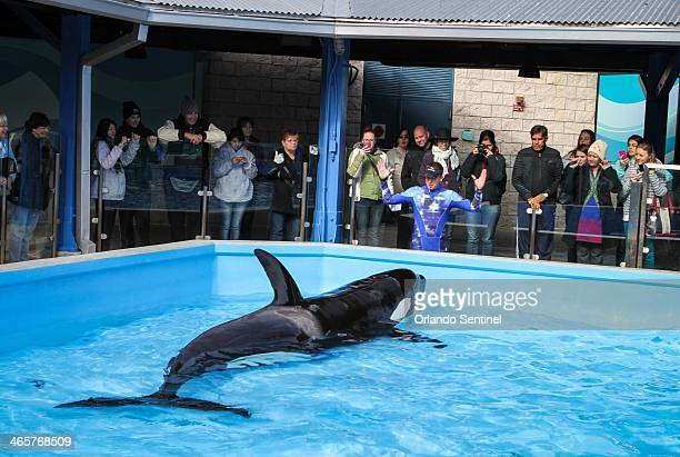 Trainers work with Orcas during a show at the Shamu Up Close attraction at Sea World in Orlando Fla Jan 7 2014