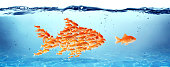 goldfish grouped learning from the largest fish