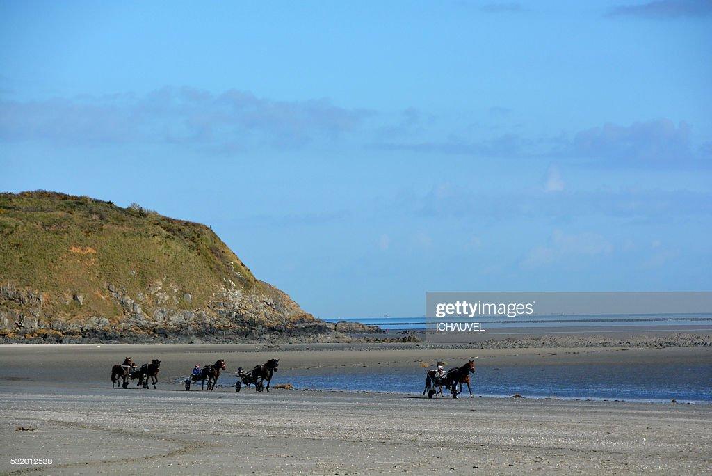 Training of Horses France