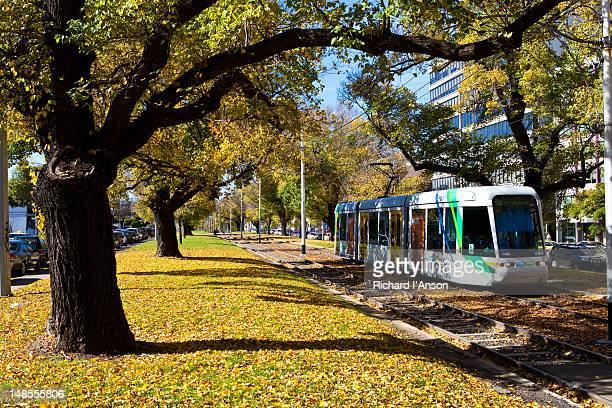 Tram on Victoria Parade in autumn.
