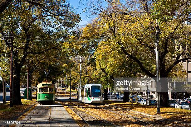 Trams on Victoria Parade in autumn.