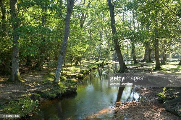 Tranquil and serene view of Ober Water in late summer in the New Forest National Park, a popular place for nature lovers in Hampshire.