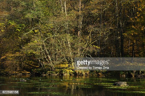 Tranquil autumn moods on Dyje river
