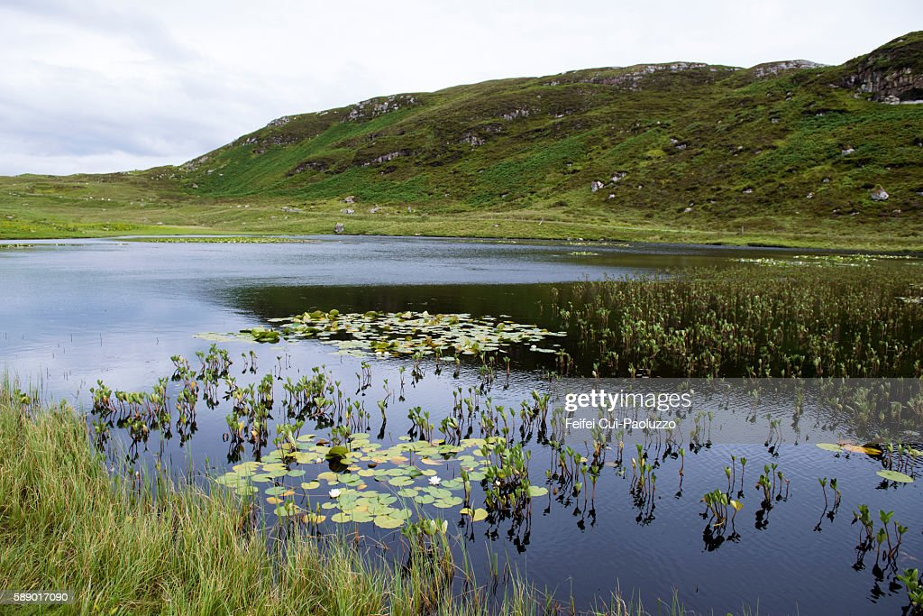 Tranquil landscape and White Water lilies at Tolsta of Isle of Lewis in Scotland