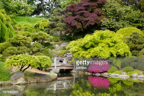Tranquil secluded Japanese Garden with pond