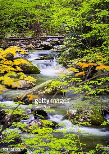Tranquil Stream in the Smokies : Stock Photo