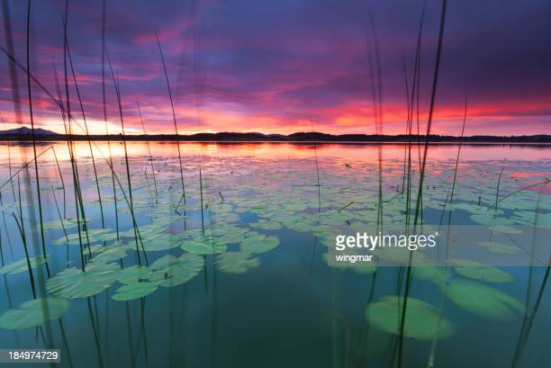 tranquil sunset at lake bannwaldsee, bavaria - germany, water lily