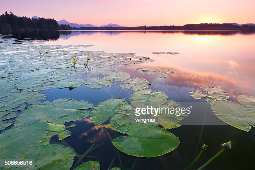 tranquil sunset at lake bannwaldsee, bavaria - germany, water lily : Stock Photo