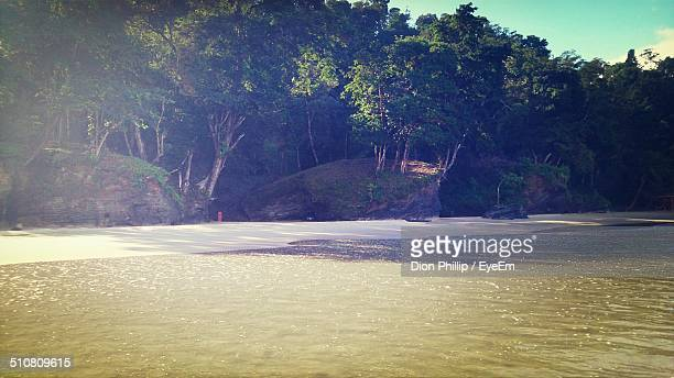 Tranquil view of trees and shore at beach
