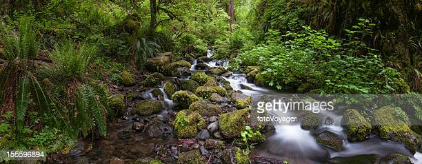 Tranquil waterfall in lush green forest wilderness