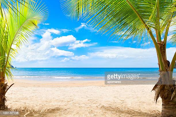 Tranquill tropical island beach in the Caribbean with palm trees