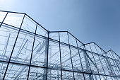transparent glass wall of agricultural greenhouse against blue sky background