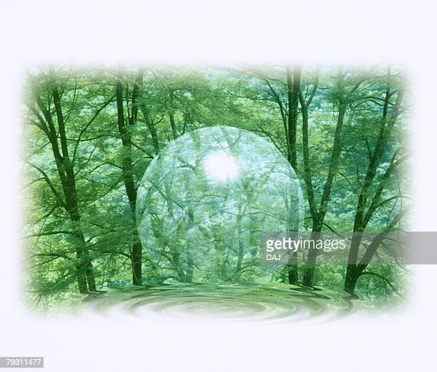 Transparent Orb in Forest, High angle view, Composite