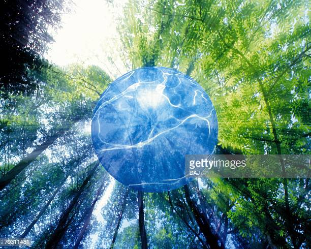 Transparent Orb in Forest, Low angle view, Composite
