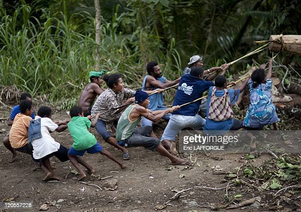 Transport of a boat in Papua New Guinea on October 03 2009 In the area of Alotau we crossed villagers who were carving a giant boat The boat is...