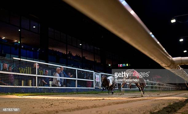 Trap 1 Farloe Calvin wins race 10 of the William Hill Wimbledon Derby 1st round Heats at Wimbledon greyhound track on May 01 2014 in London England
