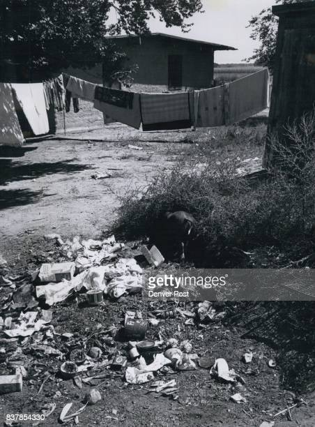 Trash in Foreground is Typical of conditions at Migratory worker camp A pig can be seen roaming through the debris an outhouse of area is at right...
