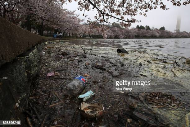 Trash is seen in the water as cherry trees around Tidal Basin are in peak bloom March 27 2017 in Washington DC The blossoms survived after a late...