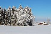 Winter, Schnee, Landschaft, sonnig, Wintermärchen, traumhaft, Allgäu, Bayern