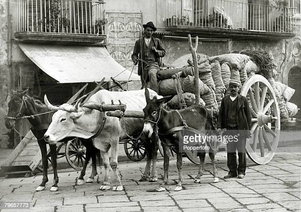 Travel Cities Italy Naples pic circa 1900 A peasant cart laden with sacks pulled by a mule an ox and a donkey